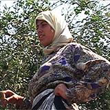 Ruta 181: Fragmente ale unei călătorii în Palestina-Israel